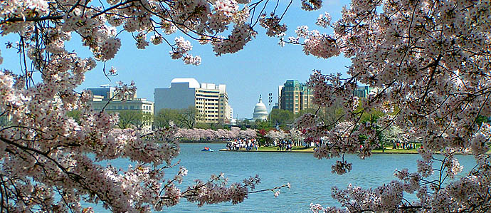 Cherry Blossom Festival Drink Specials, March 20-April 27