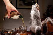 Craft Beer DC | BrewDog is Releasing a $20,000 Beer Stuffed in a Taxidermied Squirrel | Drink DC