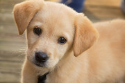 Craft Beer DC | BrewDog Announces Puppy Parental Leave for Its Employees | Drink DC