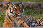 Craft Beer DC | Drink This Beer to Help Save the Tiger Population | Drink DC