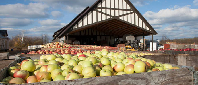 Exploring the Art of Cider Making with Greg Hall of Virtue Cider